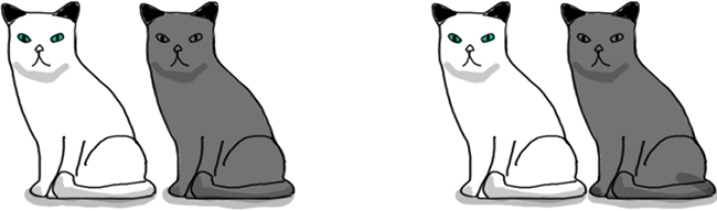 Two pairs of cats consisting each one on a white cat and a grey one.